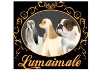 Lumaimale Kennel - Criamos calidad, no cantidad